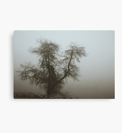 Fog and Branch Canvas Print
