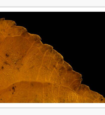 Dried Poplar Leaf Macro Sticker
