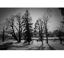 Dramatic trees in the snow Photographic Print