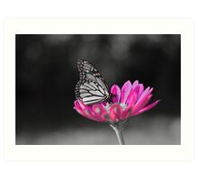 colorized butterfly  Art Print