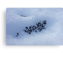 Dead Leaf In The Snow Canvas Print
