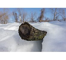Log In The Snow Photographic Print