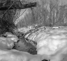 Black and White Snowy Pond by CSSphotos