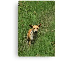 Dog in Tall Grass Canvas Print