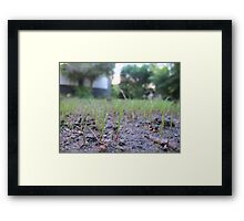little grass Framed Print
