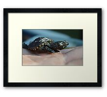 Baby Snapping Turtle #2 Framed Print