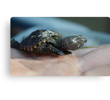 Baby Snapping Turtle #2 Metal Print