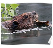 Beaver Working Poster
