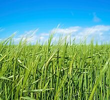 Grass field by Sebastien Coell