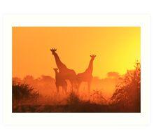 Giraffe - African Wildlife Background - Golden Sunset Bliss Art Print