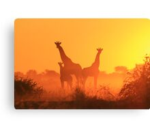Giraffe - African Wildlife Background - Golden Sunset Bliss Canvas Print