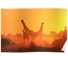 Giraffe - African Wildlife Background - Golden Sunset Bliss Poster