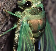 Cicada of Emerald & Gold by William C. Gladish, World Design