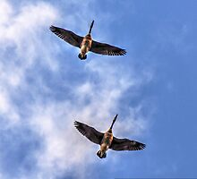 Wind beneath our wings... (click large)  by Poete100