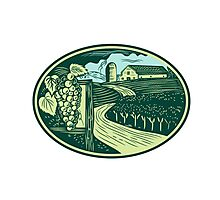 Grapes Vineyard Winery Oval Woodcut Photographic Print