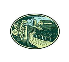 Grapes Vineyard Winery Oval Woodcut Photographic Print