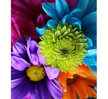 Multi-Colored Flowers by FruityJam