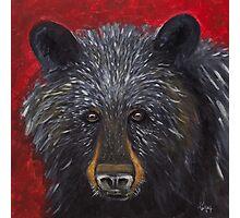 Great Smoky Mountains Black Bear Portrait Photographic Print