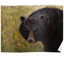 Great Smoky Mountains Black Bear Portrait Poster
