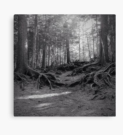 Grove Canvas Print