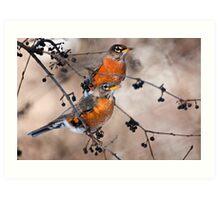 American Robins Art Print