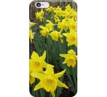 Easter Daffodils - Greeting Card iPhone Case/Skin