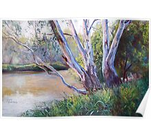 Redgums Poster