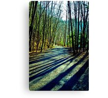 Trees Line the Path Canvas Print