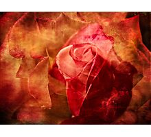 Romancing the rose Photographic Print