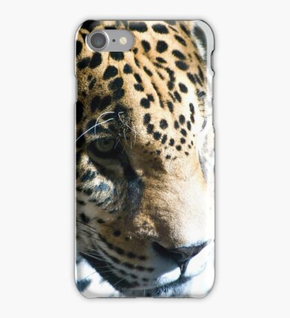 Focused Feline iPhone Case/Skin