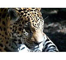 Focused Feline Photographic Print