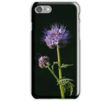 Phacelia tanacetifolia Wild flower  iPhone Case/Skin