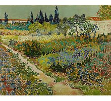 Vincent Van Gogh -Impressionism , Garden at Arles, July 1888 Van Gogh Photographic Print