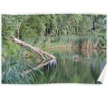 Lake with Fallen Tree Trunk Poster