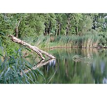 Lake with Fallen Tree Trunk Photographic Print