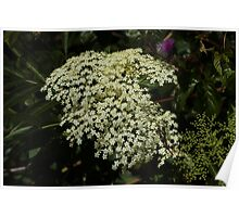 Bunches of White Flowers Poster