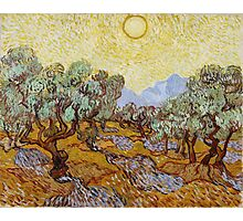 Vincent Van Gogh - Olive Trees, 1889 Photographic Print