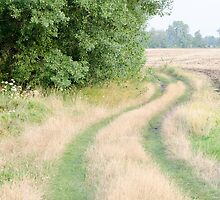 Dirt Road Covered with Grass Horizontal by Inimma