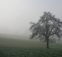 Tree in MIst by Anthony Thomas