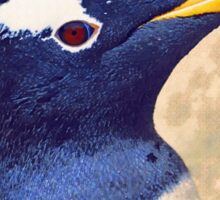Gentoo penguin Sticker