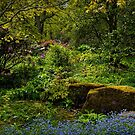 The Fairy Dell. by Colin Metcalf
