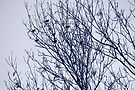 Starlings in a Tree by Artberry