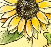 Hand drawn sunflower Sticker