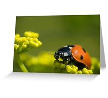 Ladybird close up on a plant Greeting Card