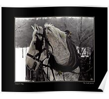 The Draft Horse Poster Poster