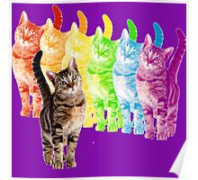 rainbow cats Poster
