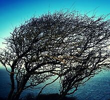 Sea tree view photography by Jadeykins87