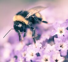 Bumble Bee by marina de wit