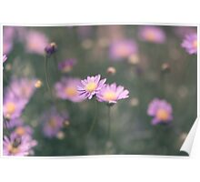 Purple field daisies Poster