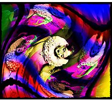 the candy coloured clown Photographic Print